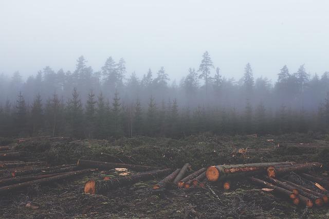 Causes Of Massive Deforestation